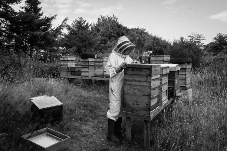 Beekeeping_0004