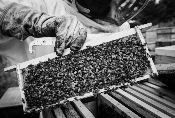 Beekeeping_0005