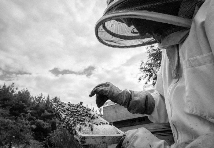 Beekeeping_0008