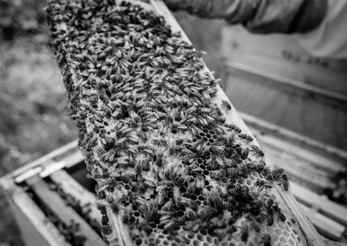 Beekeeping_0009