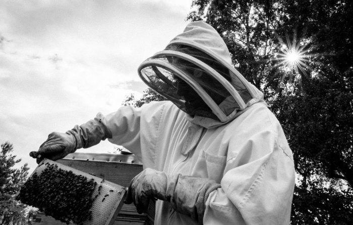 Beekeeping_0010