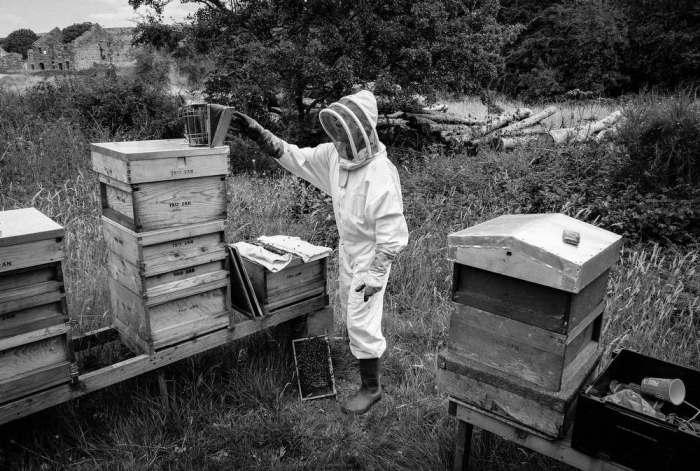 Beekeeping_0011