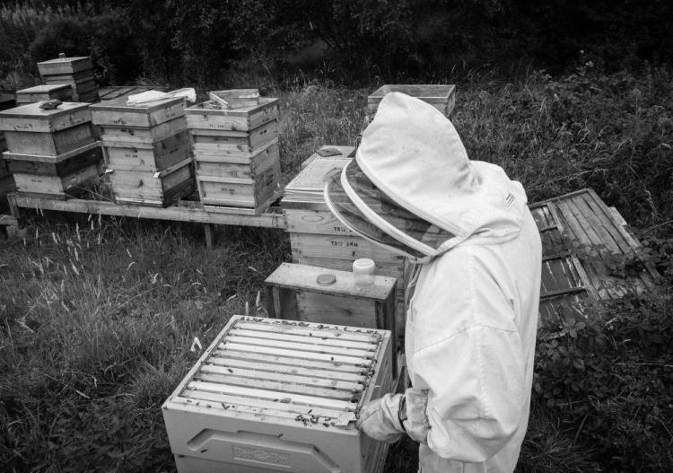 Beekeeping_0012
