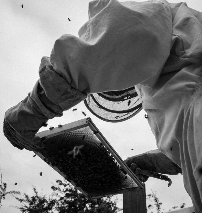 Beekeeping_0013