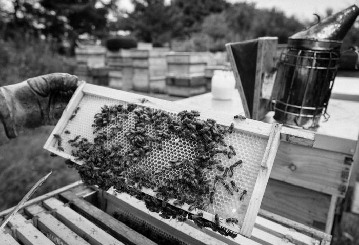 Beekeeping_0014