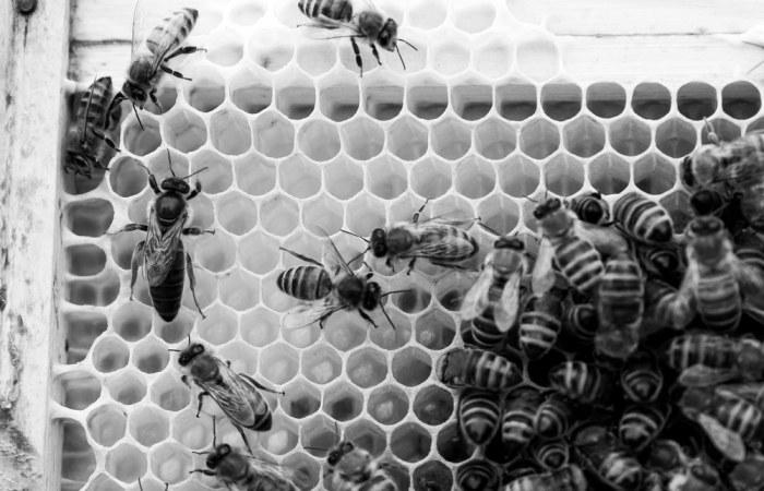 Beekeeping_0015