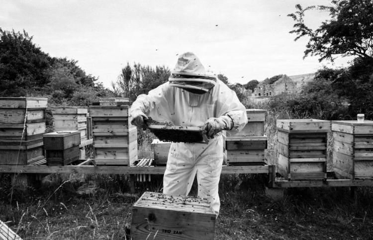 Beekeeping_0016