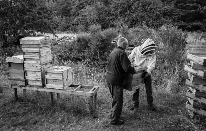 Beekeeping_0019