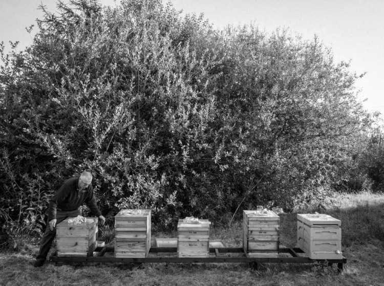 Beekeeping_0025
