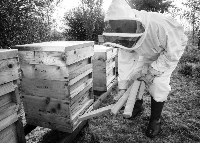 Beekeeping_0026