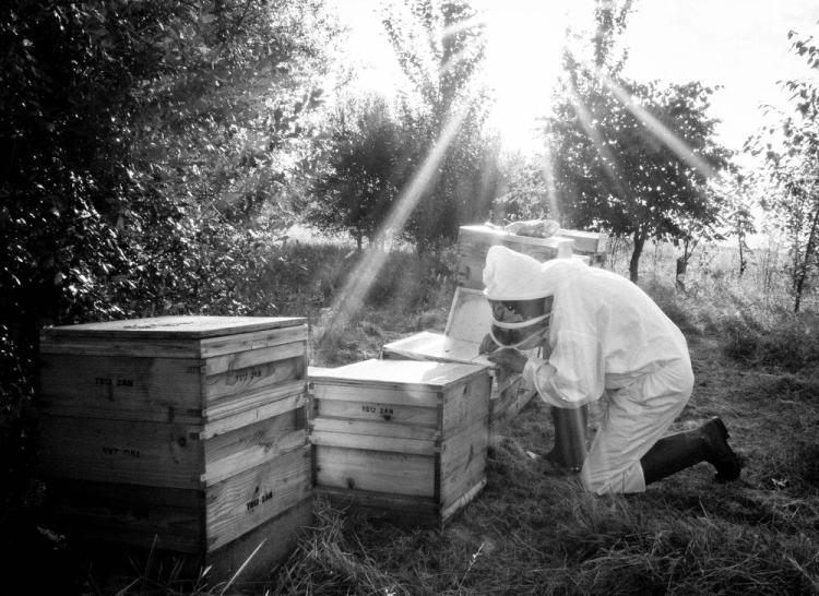 Beekeeping_0028