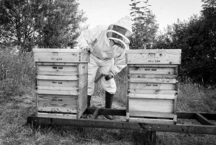Beekeeping_0029