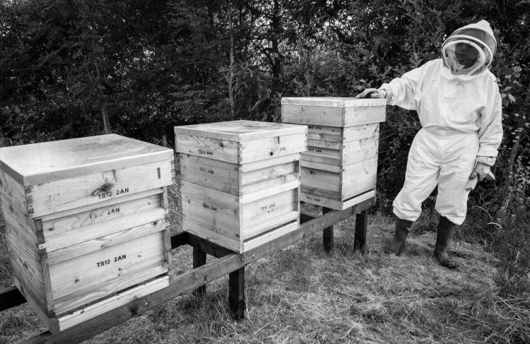Beekeeping_0031