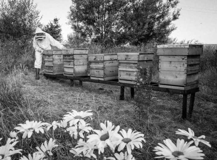 Beekeeping_0033
