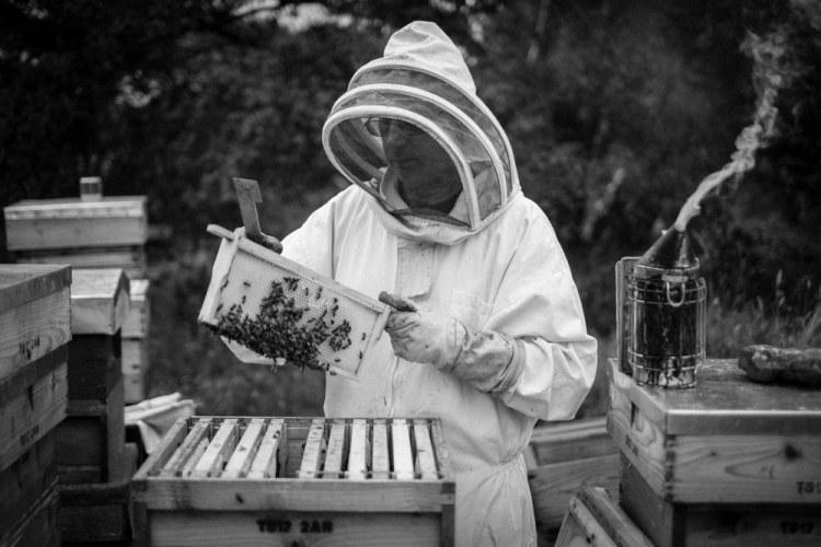 Beekeeping_0034