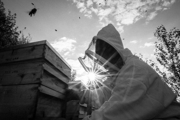 Beekeeping_0035