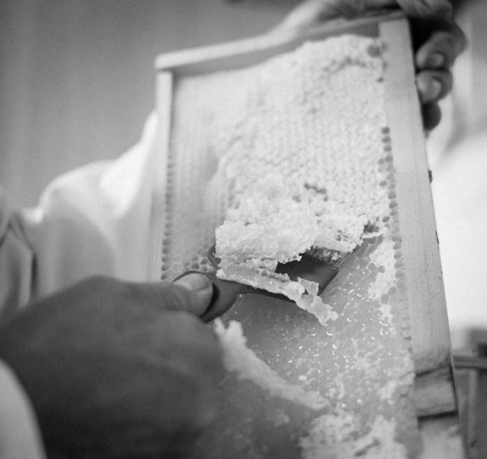 Beekeeping_0058