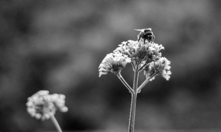 Beekeeping_0071