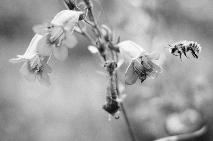 Beekeeping_0073
