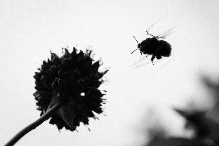 Beekeeping_0074