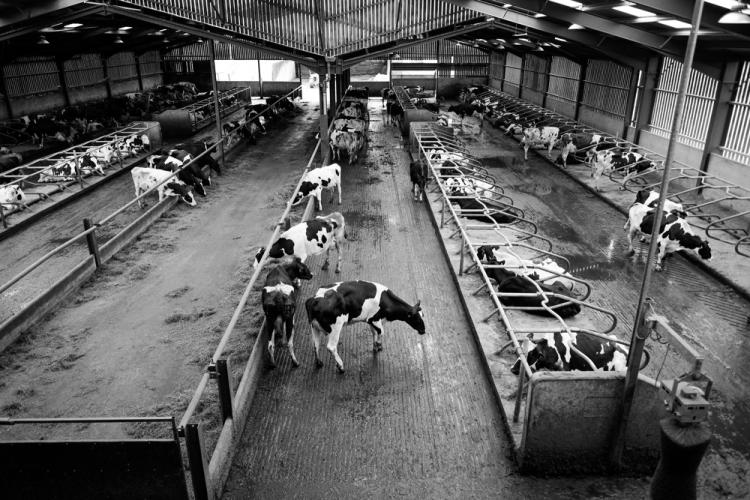 Dairy Farmer Nigel Watson