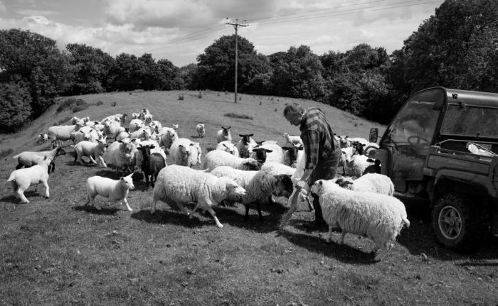 Livestock farmer Will Terry